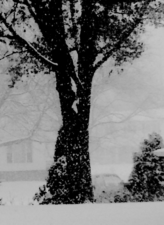 1. First Snowstorm, iPhone 4s, December 2013; © Sally W. Donatello and Lens and Pens by Sally, 2013
