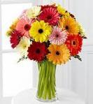 Gerber Daisy Bouquet, Google Images