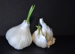 Garlic Bulbs, Nikon DSLR, 2012; © Sally W. Donatello and Lens and Pens by Sally, 2014