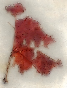 3. Leaf Street Graffiti, Series #2, iPhone 4s, Glaze, March 2014; © Sally W. Donatello and Lens and Pens by Sally, 2014