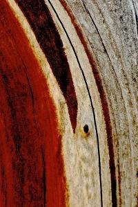 1. Hirschman Diggins, Nevada City, California, Manzanta  Tree, iPhone 4s, April 2014; © Sally W. Donatello and Lens and Pens by Sally, 2014