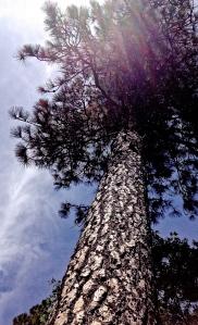 1. Sunbeams on Cedar, Colfax, California, © Sally W. Donatello and Lens and Pens by Sally, 2014