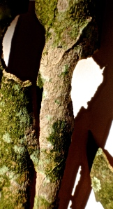 6. Bark of a Sycamore Tree; Copyright © 2014 Sally W. Donatello All Rights Reserved/Lens and Pens by Sally