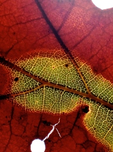 2. Fallen Oak Leaf, iPhone 4s; Copyright © 2014 Sally W. Donatello All Rights Reserved/Lens and Pens by Sally