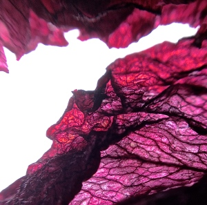 1. Dried Native Hibiscus Petals; Copyright © 2014 Sally W. Donatello All Rights Reserved/Lens and Pens by Sally
