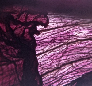 3. Dried Native Hibiscus Petals; Copyright © 2014 Sally W. Donatello All Rights Reserved/Lens and Pens by Sally