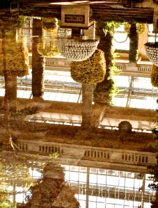 2. Reflections, Chrysanthemum Festival, Longwood Gardens; Copyright © 2014 Sally W. Donatello All Rights Reserved/Lens and Pens by Sally