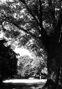 1. Afternoon Light; Copyright © 2015 Sally W. Donatello All Rights Reserved/Lens and Pens by Sally