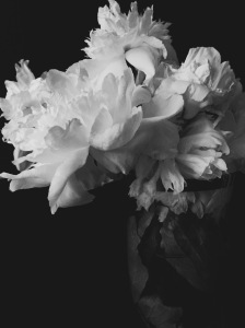 2. White Peony; Copyright © 2015 Sally W. Donatello All Rights Reserved/Lens and Pens by Sally