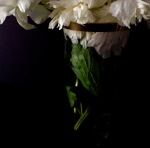 3. White Peony in Vase; Copyright © 2015 Sally W. Donatello All Rights Reserved/Lens and Pens by Sally