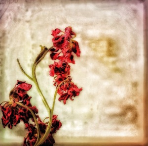 1. Dried Reddish-Purple Stock; Copyright © 2016 Sally W. Donatello All Rights Reserved