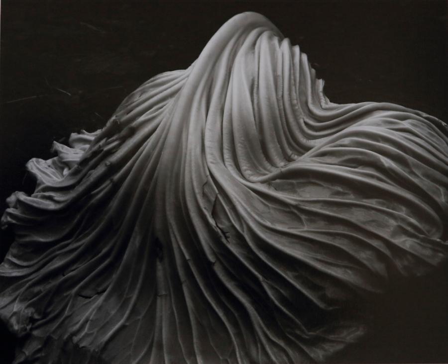 Cabbage-Leaf, 1931, Edward Weston