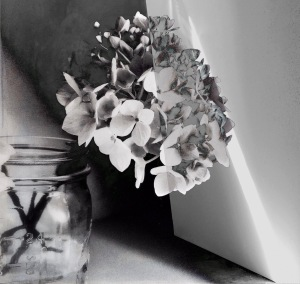 1. Hydrangea with Beam of Light; Copyright © 2016 Sally W. Donatello All Rights Reserved