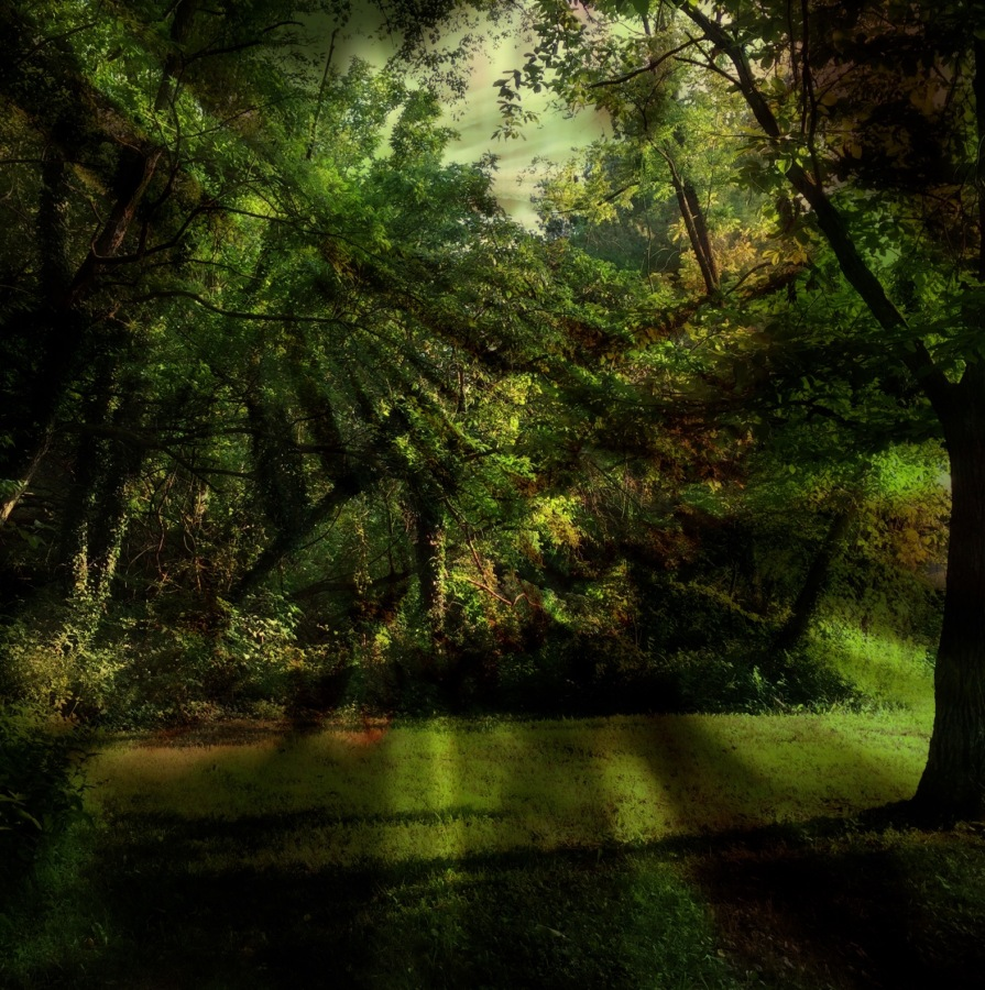 Forest Primeval Photomontage; Copyright © 2016 Sally W. Donatello All Rights Reserved