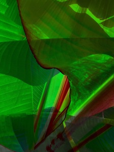 Banana Leaves Photomontage; Copyright © 2016 Sally W. Donatello All Rights Reserved