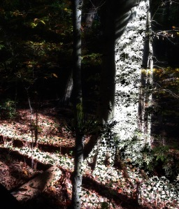 Forest Light Photomontage #2; Copyright © 2016 Sally W. Donatello All Rights Reserved