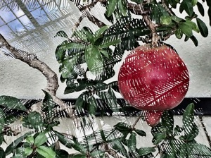 1. Longwood Gardens Photomontage #1 ; Copyright © 2016 Sally W. Donatello All Rights Reserved