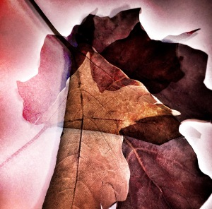 1. Autumn Leaves Photomontage; Copyright © 2016 Sally W. Donatello All Rights Reserved