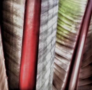 1. Palm Leaves Photomontage; Copyright © 2017 Sally W. Donatello All Rights Reserved