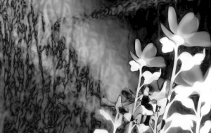 1. Sundew Photomontage, Longwood Gardens; 2017 Sally W. Donatello All Rights Reserved