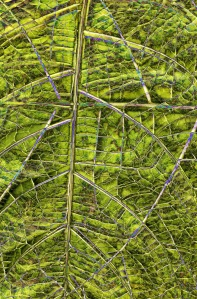 Palm Leaf Photomontage, Longwood Gardens; 2017 Sally W. Donatello All Rights Reserved