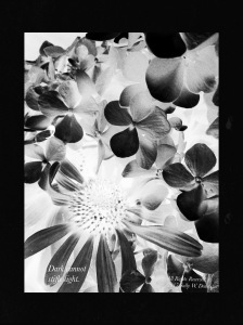 Flower Photomontage; 2017 Sally W. Donatello All Rights Reserved