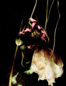 Dried Flowers Photomontage; All Rights Reserved 2017 Sally W. Donatello