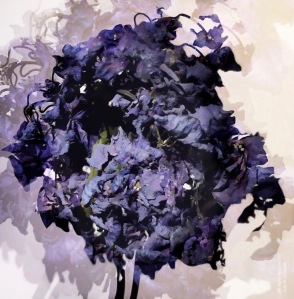 Dried Hydrangea Photomontage #3; All Rights Reserved 2017 Sally W. Donatello