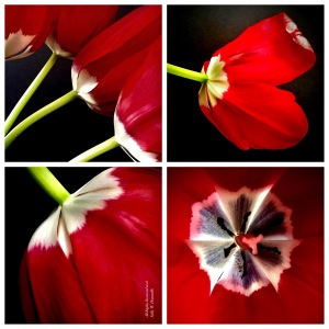 Tulip Collage II; All Rights Reserved 2018 Sally W. Donatello