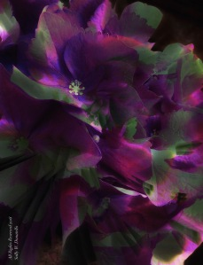 Cactus and Hydrangea Photomontage; All Rights Reserved 2018 Sally W. Donatello