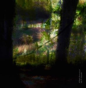 Light in the Forest; All Rights Reserved 2018 Sally W. Donatello