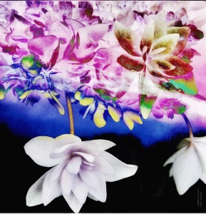 Floral Sky Photomontage, All Rights Reserved 2018 Sally W. Donatello