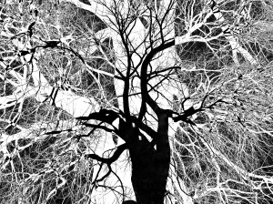 Tree Series, No. 3, Sally W. Donatello 2019 All Rights Reserved